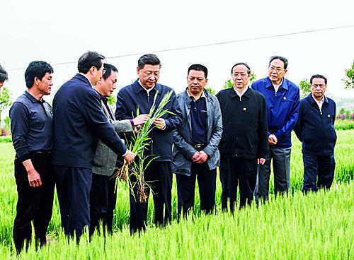 白馍吃到嘴 日子甜在心——总书记小岗行重视现代农业发展对丰收寄予厚望