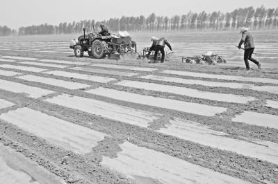内蒙古赤峰市:大力推广高效节水膜下滴灌技术.jpg